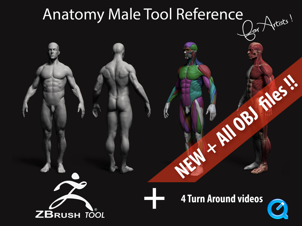 Anatomy Male Tool Reference for Artists !_DOWNLOADS Anatomy Male Tool Anatomy Male Tool,Reference for Artists