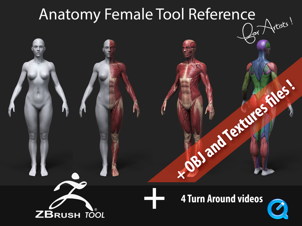 Anatomy Female Tool Reference for Artists !_DOWNLOADS Anatomy Female Anatomy Female,Reference for Artists