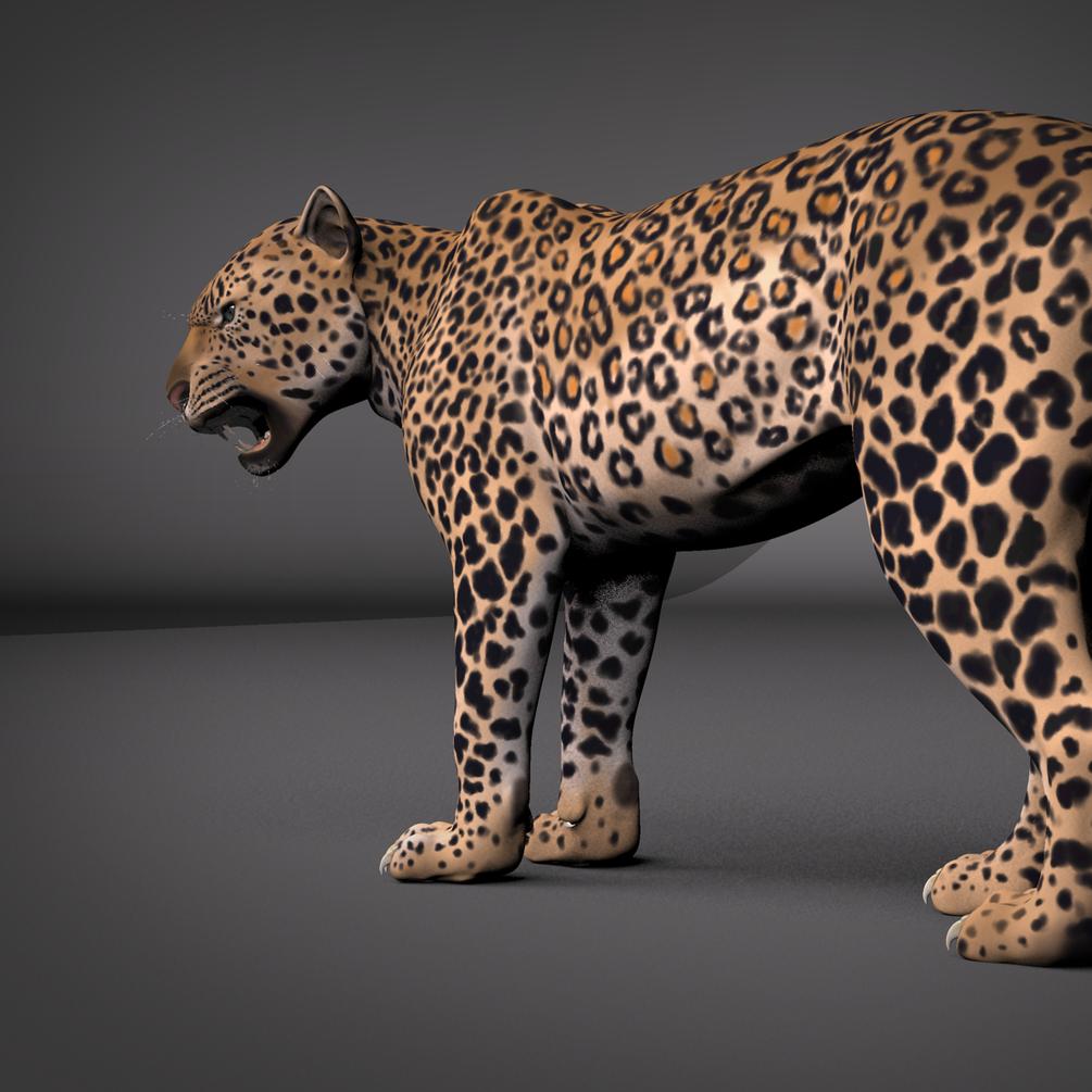 Leopard Maya Rig _ DOWNLOAD Leopard Maya Rig Leopard Maya Rig