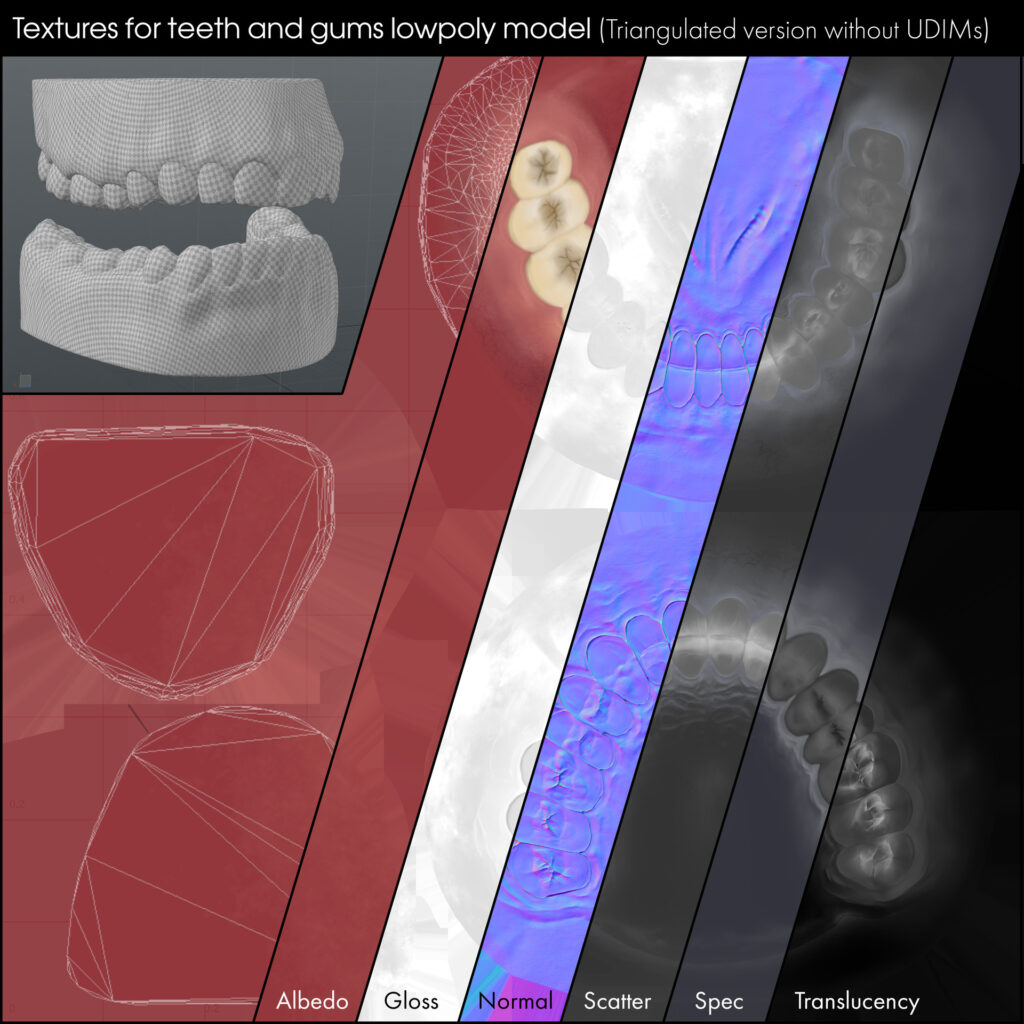 Free realistic teeth 3d model with textures _ By Simon Telezhkin realistic teeth realistic teeth,3d model,textures,Simon Telezhkin